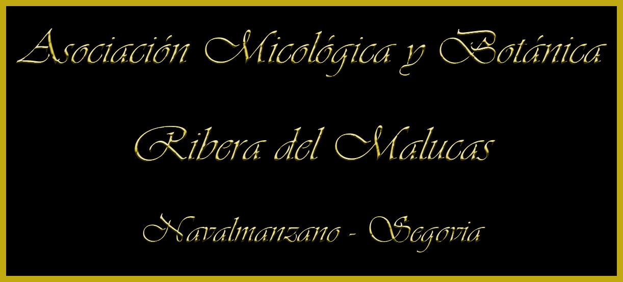 Asociación Micologica Ribera del Malucar